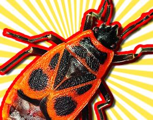 firebug-thumb